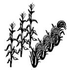 Crops (Maize-rice)